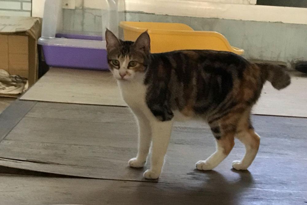 Cat04004