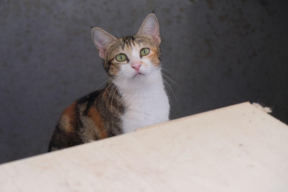 Cat04005