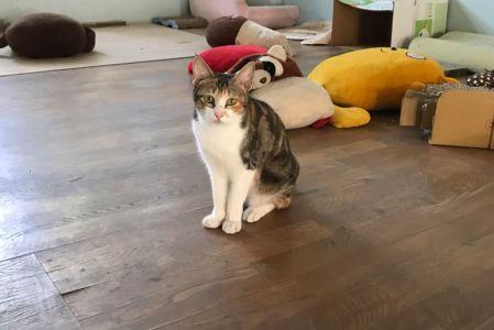 Cat04001