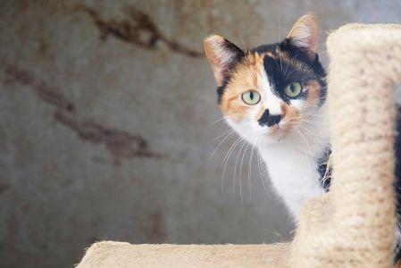 Cat20181225a2